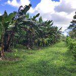 La rete vendita Artebianca alla scoperta delle piantagioni del Madagascar